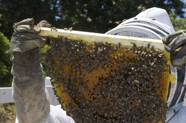 honey-109007_1280