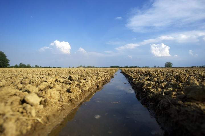 solco_per_irrigazione_-_risaia_vercelli