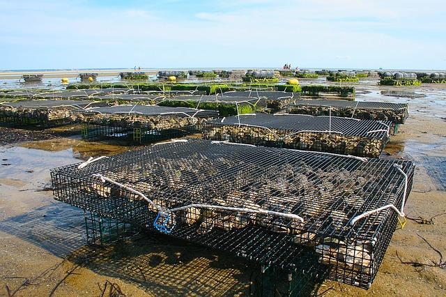 oyster-farm-1404177_640